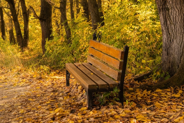 Bench in the park in autumn season