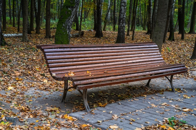 Bench at the park in autumn season