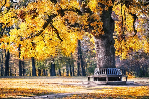 Bench in the park under spreading tree