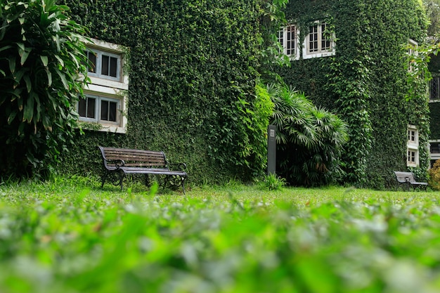 Bench in the park and walls with green vines