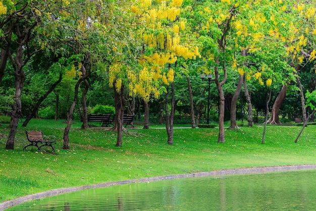 공원에서 나무 아래 벤치