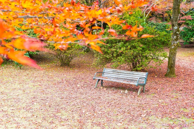Bench with red maple leaves blooming at arashiyama