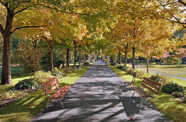 Benches in an alley in a beautiful park borded by colorful foliage of trees in autumn