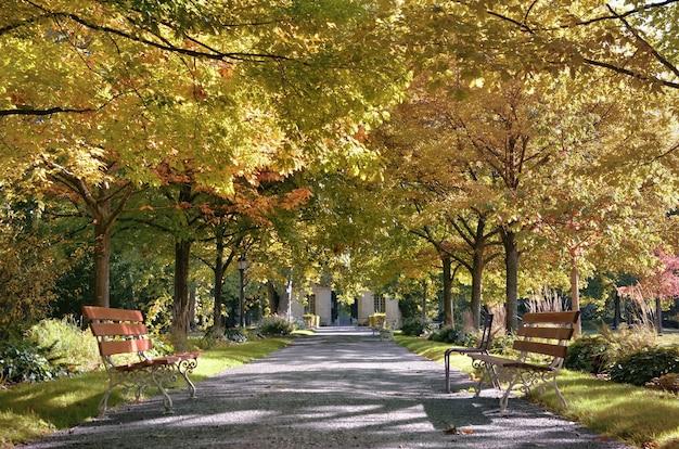Скамейки в переулке в красивом общественном парке, окаймленном разноцветной листвой деревьев осенью
