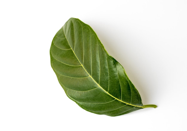 分離されたベンドジャックフルーツの葉