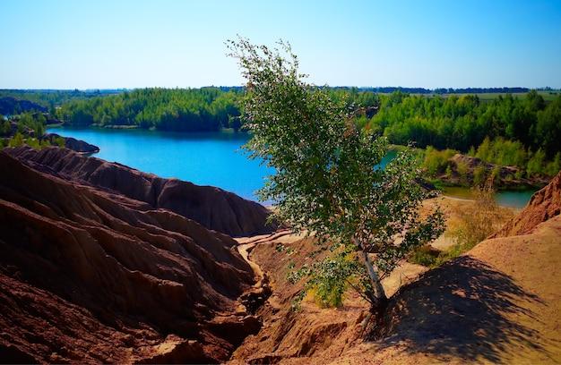 砂丘の風景の背景に曲がった木
