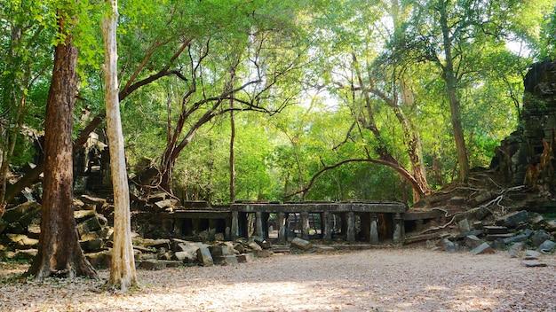 Руины древнего храма бенг меалеа посреди леса джунглей в сием реам, камбоджа