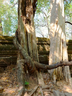 Beng mealea ancient temple ruines in the middle of jungle forest in sieam ream, cambodia