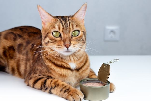 Bengal cat and canned tuna in a tin. pet feeding concept.
