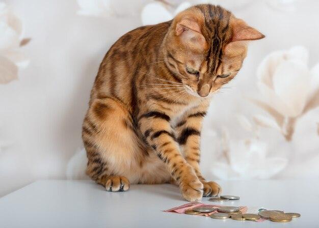 ベンガル猫は金と銀のコインを数えます。金持ちの猫。