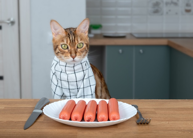 Bengal cat in a napkin around his neck eats sausages from a white plate.