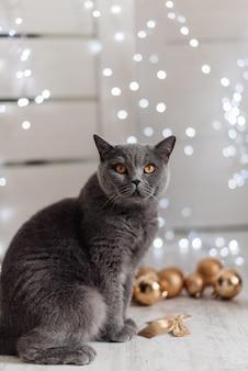 クリスマスツリーにベンガル猫