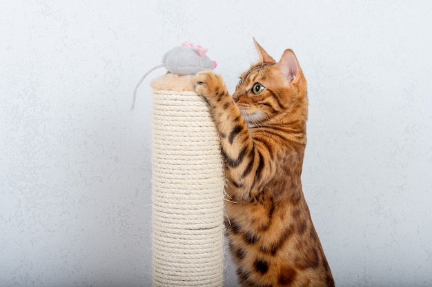 ベンガル猫は引っかき棒の横にある灰色の豪華なマウスで遊ぶ