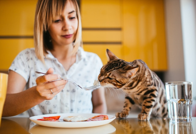 Bengal cat tastes breakfast from woman's fork