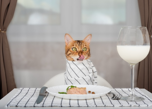 Bengal cat with bib waits for food in the room, licks its lips