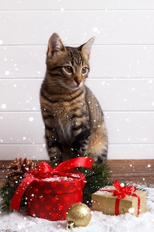 Bengal kitten and gift boxes