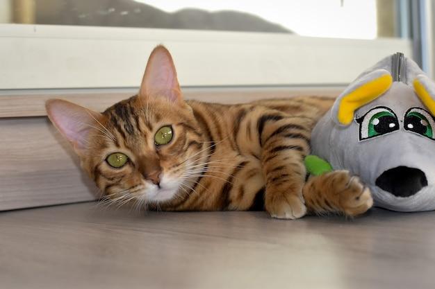 ベンガルの子猫はおもちゃのある部屋の床に横たわっています
