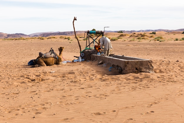 Berber and camel near the well
