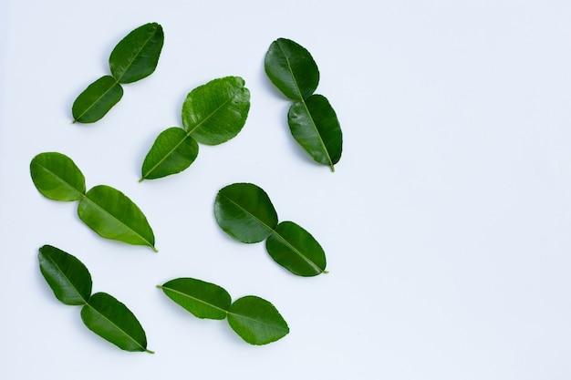 Бергамот кафр-лайм оставляет свежий ингредиент травы, изолированные на белом фоне.