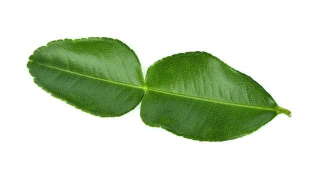 Bergamot leaf isolated on white background