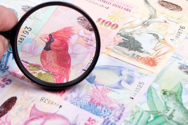 Bermudian dollar in a magnifying glass