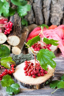 ガマズミ属の木の果実と葉