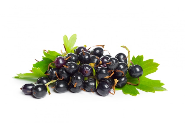 Berries black currant with green leaf.