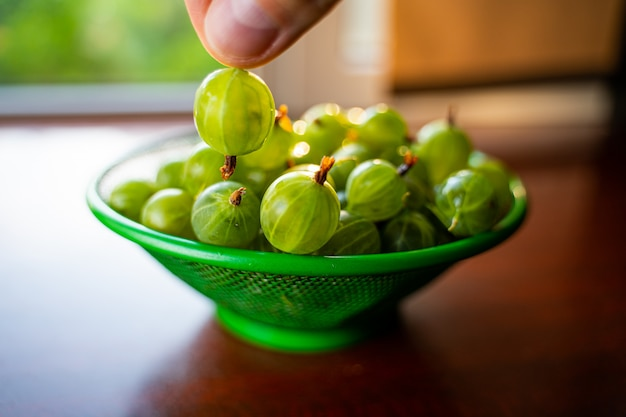 Berries in hand. heap of green wet washed gooseberry fruit in a colander on table.