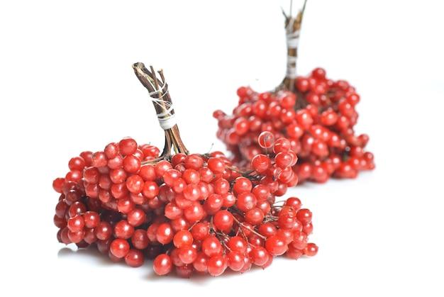 붉은 가막살 나무속 열매