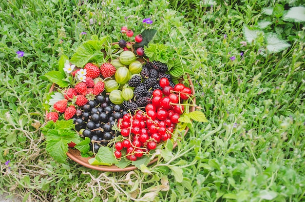 Berries on plate