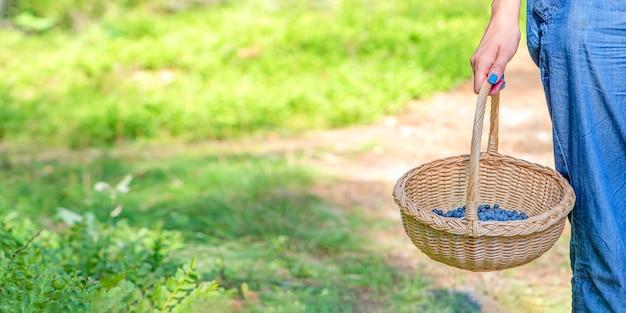 ベリーシーズンは森の中でブルーベリーを集める女性はバスケットを持って森を歩く