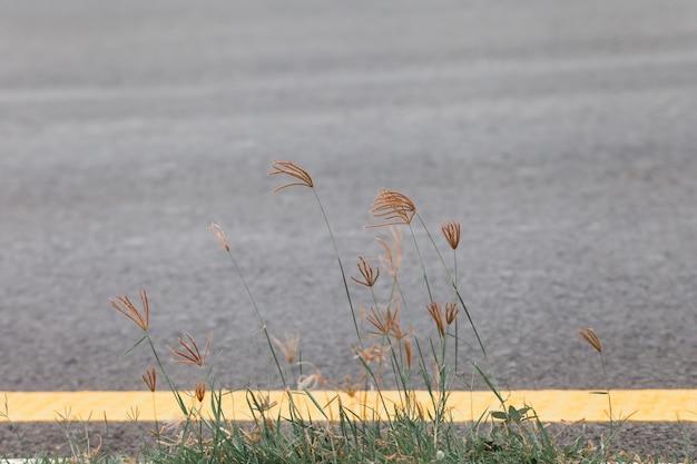 잔디 꽃과 식물으로 길 옆에