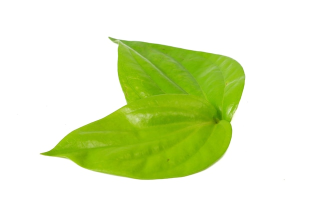 Betel leaf isolated on a white background