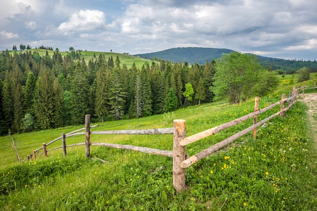 Bewitching beautiful summer landscape of a green meadow on a hill overlooking a dense coniferous forest. mountains in a cloudy warm summer day