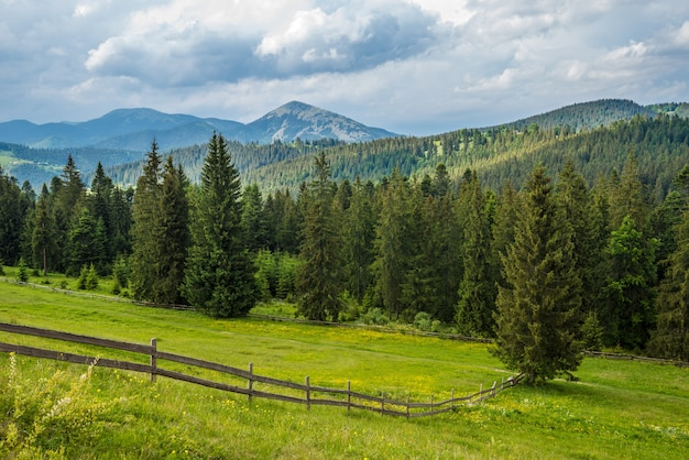 Bewitching beautiful summer landscape of a green meadow on a hill overlooking a dense coniferous forest
