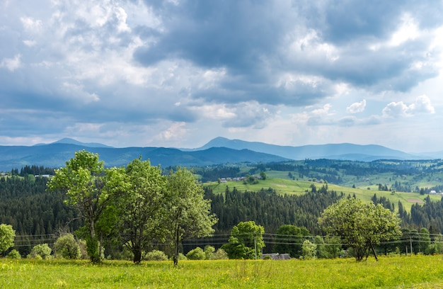 Bewitching beautiful summer landscape of green meadows