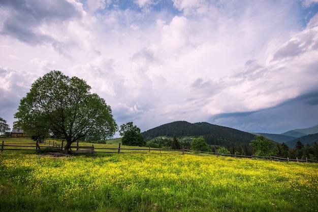 密な針葉樹林を見下ろす丘の上の緑の牧草地の魅惑的な美しい夏の風景