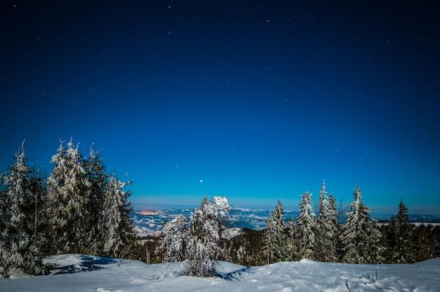 丘の雪の吹きだまりの中で成長する雪に覆われた背の高いモミの木の魅惑的な魔法の風景