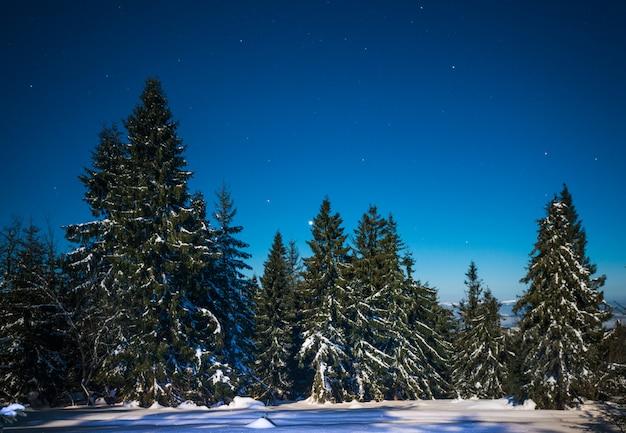 눈 덮인 키 큰 전나무의 요염한 마법의 풍경