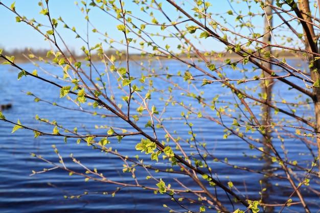 枝の春白bi
