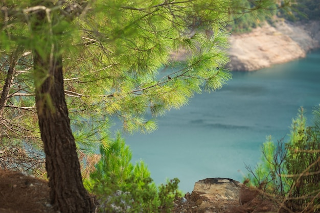 Bibrant aromatic coniferous trees and aquamarine colored water in mountains