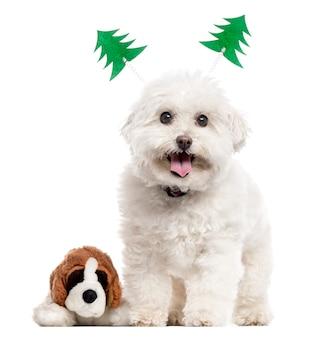 Собака бишон фризе с рождественским украшением и плюшевой игрушкой стоя