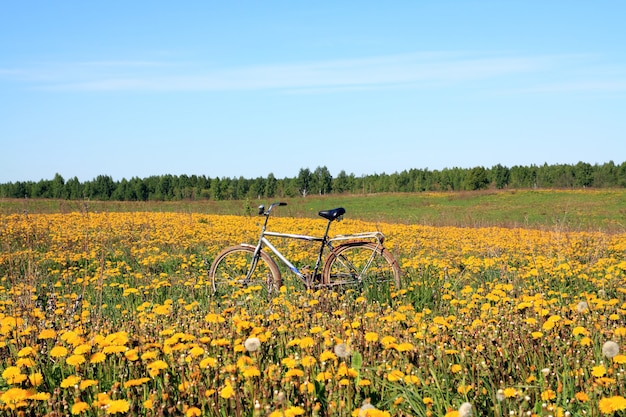 Велосипед среди одуванчиков