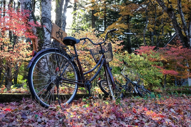 Bicycle in the middle of an autumn park full of colorful leaves