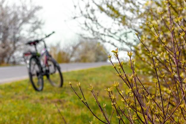 道路脇の自転車、自転車での散歩、野外活動