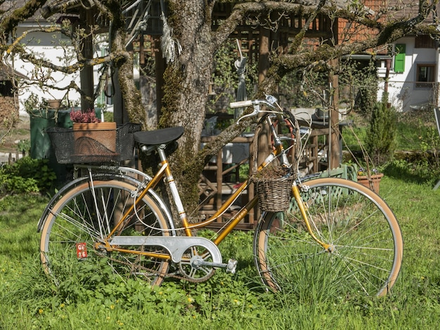 Bicycle parked in the green garden next to a tree