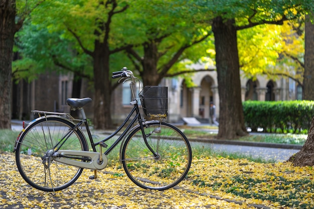 Bicycle parked in the park, among the fields of ginkgo tree