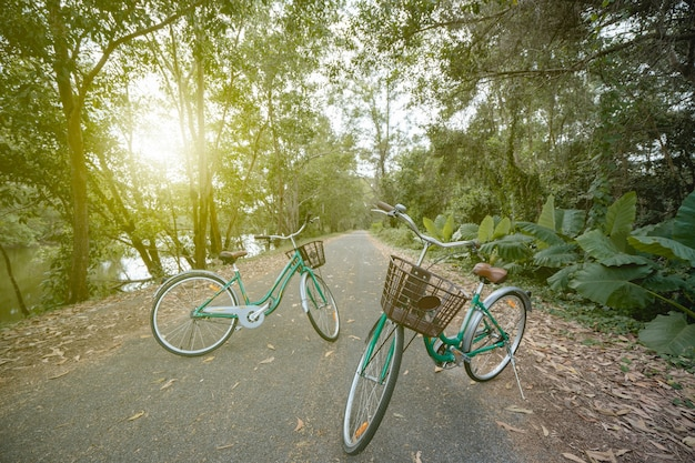A bicycle on road with sunlight and green tree in park outdoor.