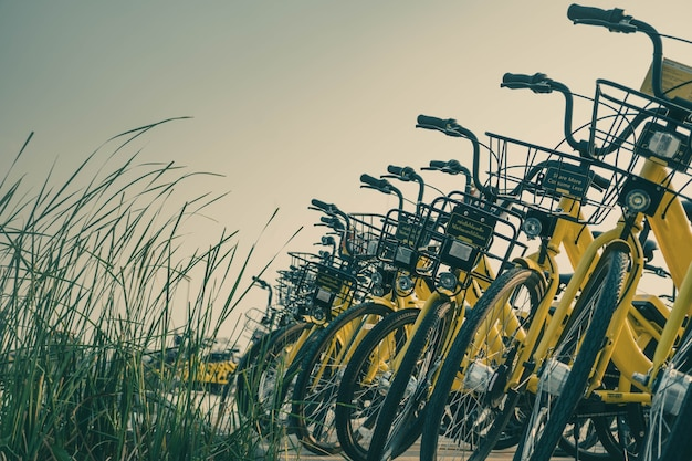 Bicycles parking in campus
