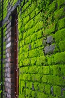 Большое количество зеленого мха на кирпичной стене